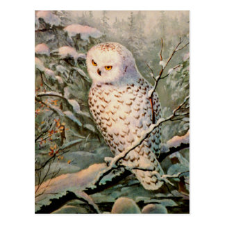SNOWY OWL by SHARON SHARPE Postcard