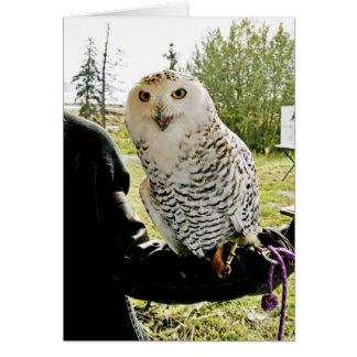 Snowy Owl Card