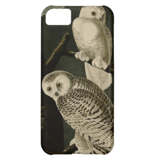 Snowy Owl Case For iPhone 5C