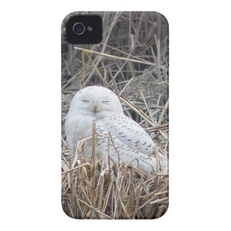 snowy owl Case-Mate iPhone 4 cases
