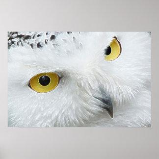 SNOWY OWL EYES POSTER