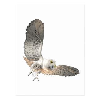 Snowy Owl Female Postcard