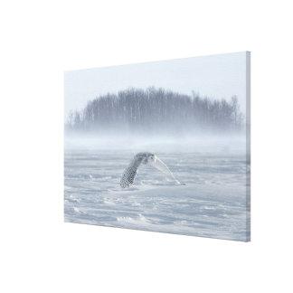 Snowy Owl Flying In Winter Canvas Print