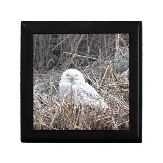 snowy owl gift box