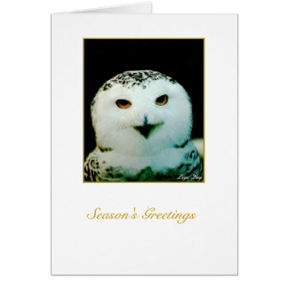 Snowy Owl Holiday Card - 'Merry Christmas'