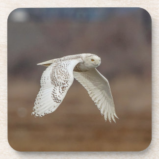 Snowy owl in flight coaster