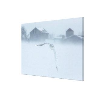 Snowy Owl In Flight In Winter Canvas Print
