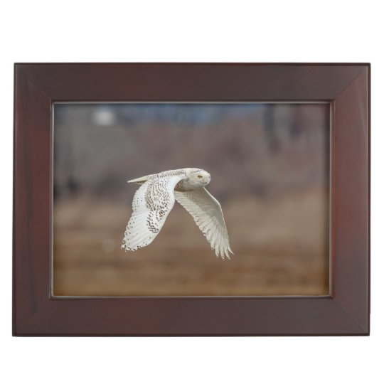 Snowy owl in flight keepsake box