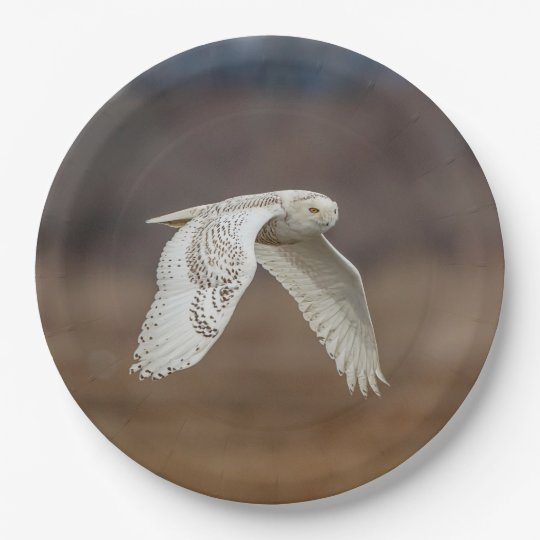 Snowy owl in flight paper plate