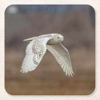 Snowy owl in flight square paper coaster