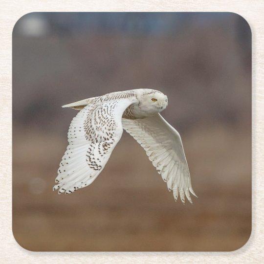 Snowy owl in flight square paper coaster