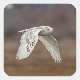 Snowy owl in flight square sticker