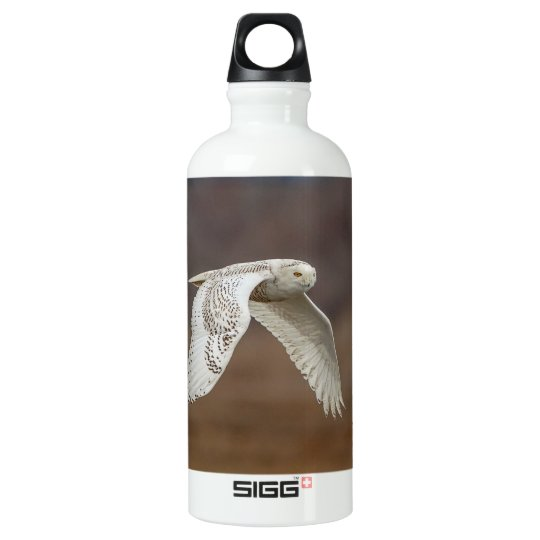 Snowy owl in flight water bottle