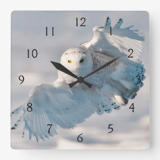 Snowy Owl landing on snow Square Wall Clock
