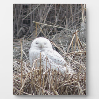 snowy owl plaque
