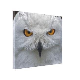 Snowy Owl Portrait Wrapped Canvas Print