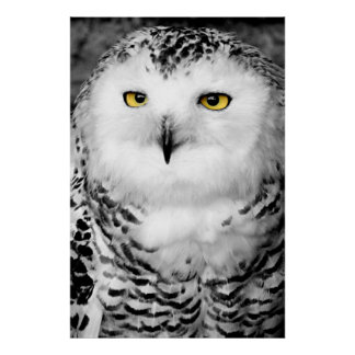 Snowy Owl Poster Print
