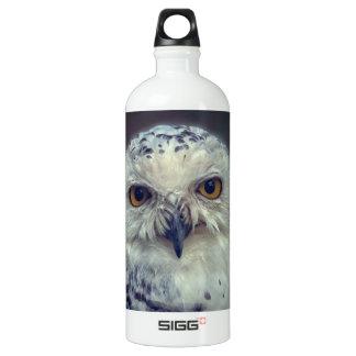 Snowy Owl, Schnee-Eule