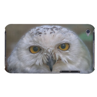 Snowy Owl, Schnee-Eule 002.2, iPod Touch Covers