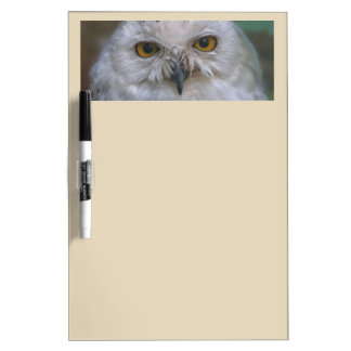 Snowy Owl, Schnee-Eule Dry Erase Board