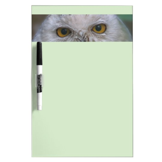 Snowy Owl, Schnee-Eule Dry-Erase Whiteboard
