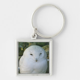Snowy Owl Silver-Colored Square Keychain