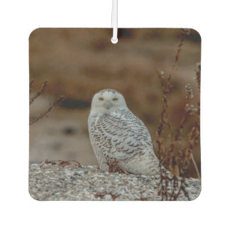 Snowy owl sitting on a rock car air freshener