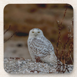 Snowy owl sitting on a rock coaster