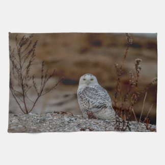 Snowy owl sitting on a rock kitchen towel