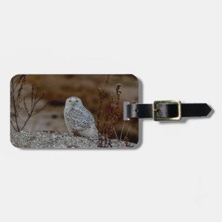 Snowy owl sitting on a rock luggage tag