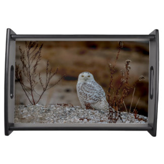 Snowy owl sitting on a rock serving tray
