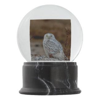 Snowy owl sitting on a rock snow globe