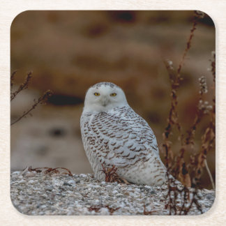 Snowy owl sitting on a rock square paper coaster