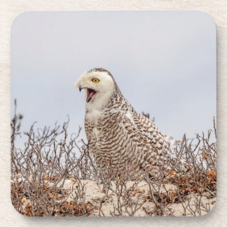 Snowy owl sitting on the beach coaster