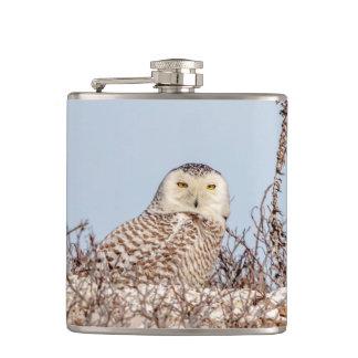 Snowy owl sitting on the beach hip flask
