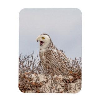 Snowy owl sitting on the beach magnet