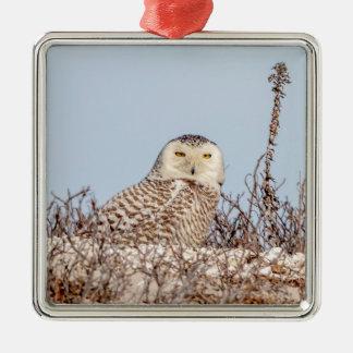 Snowy owl sitting on the beach metal ornament