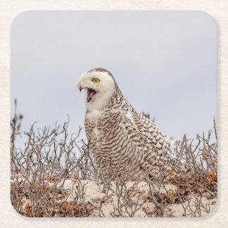Snowy owl sitting on the beach square paper coaster