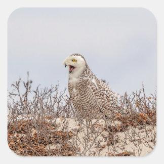 Snowy owl sitting on the beach square sticker