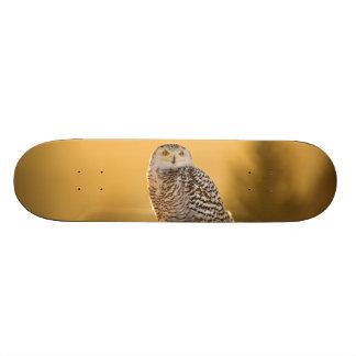 Snowy Owl Skate Board Deck