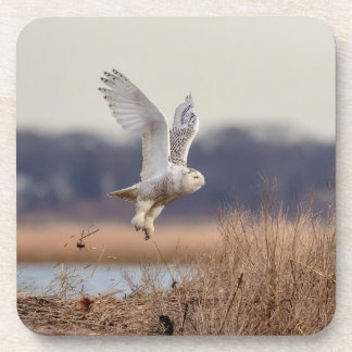 Snowy owl taking off coaster