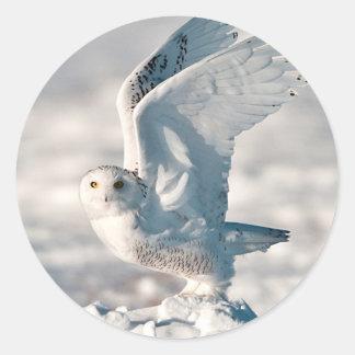 Snowy Owl taking off from snow Round Sticker