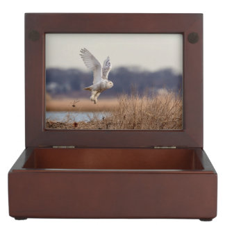 Snowy owl taking off keepsake box