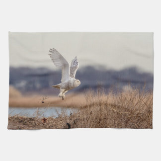Snowy owl taking off kitchen towel