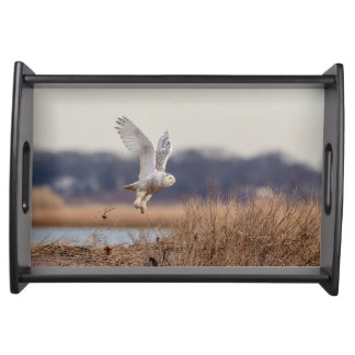 Snowy owl taking off serving tray