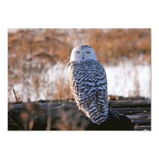 "Snowy Owl Winking 5"" X 7"" Invitation Card"