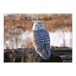 Snowy Owl Winking Invite