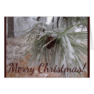 Snowy Pine Cone Winter Frost Christmas Card