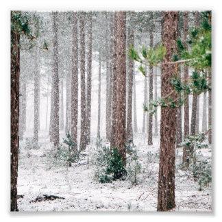 Snowy Pine trees Photo Print