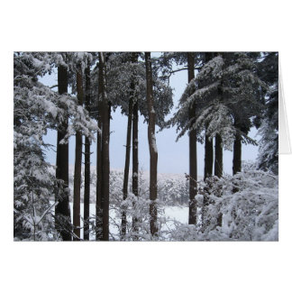Snowy Pines in Blue Light Card